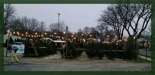 Tree sales lot